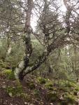 Dentro del bosque hay una gran umedad