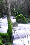 Rio Majaceite