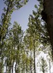 Bosque en Riofrío