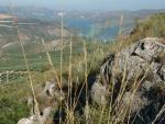 Yacimiento Megalítico de Sierra Martilla